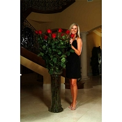 Ultimate Rose: 5 to 6ft Fresh Long Stem Red Rose Bouquet